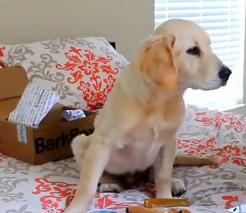 Хотя собака не должна скакать по кроватям, часто в семьях это игноруриют